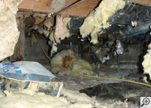 A messy crawl space filled with rotting insulation and debris in Qualicum Beach.