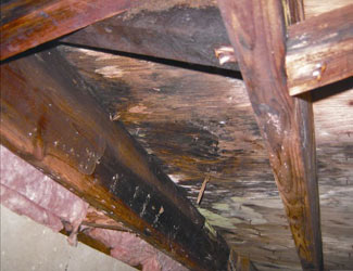 mold and rot in a Nanaimo crawl space