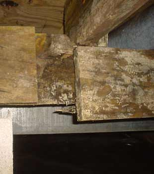 Extensive basement rot found in Victoria by Island Basement Systems