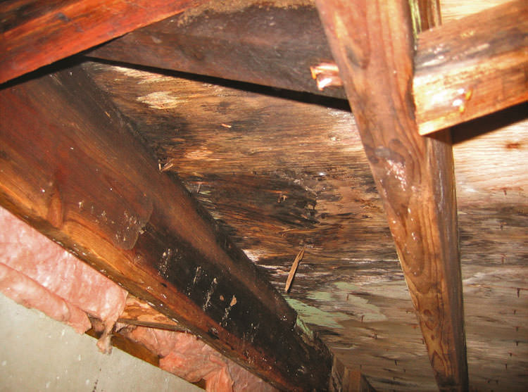 Mold Damage Crawl Spaces On Nanaimo Saanich Victoria