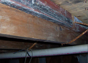 Rotting, decaying wood from mould damage in Victoria