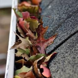 Clogged gutters filled with fall leaves  in Roberts Creek